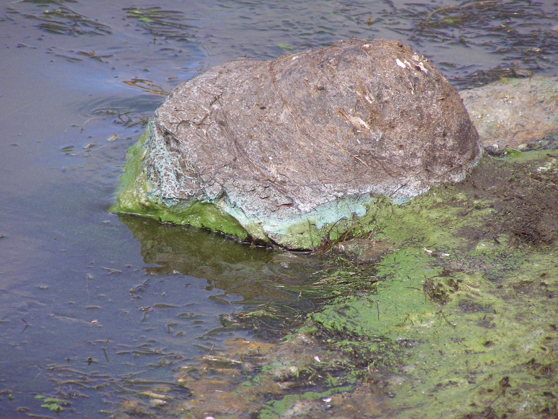 Boat Algae Scum